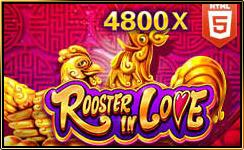 roosterinlove