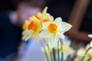Daffodils at the cake cafe and slice which are both owned by Ray O'Neill