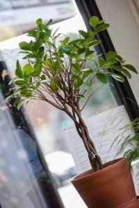 A plant in Two Boys Brew café