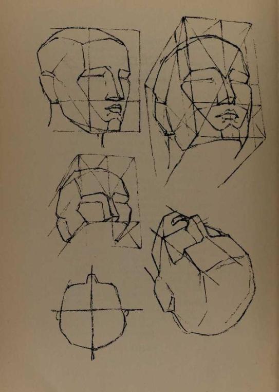 anatomia-constructiva-george-bridgman-construccion-rostro-perspectiva
