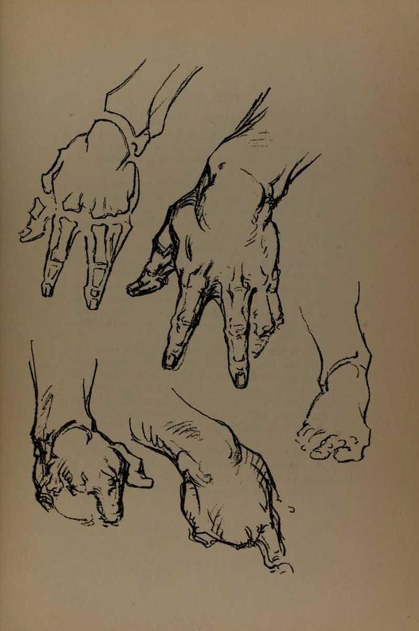 anatomia-constructiva-george-bridgman-manos-posturas