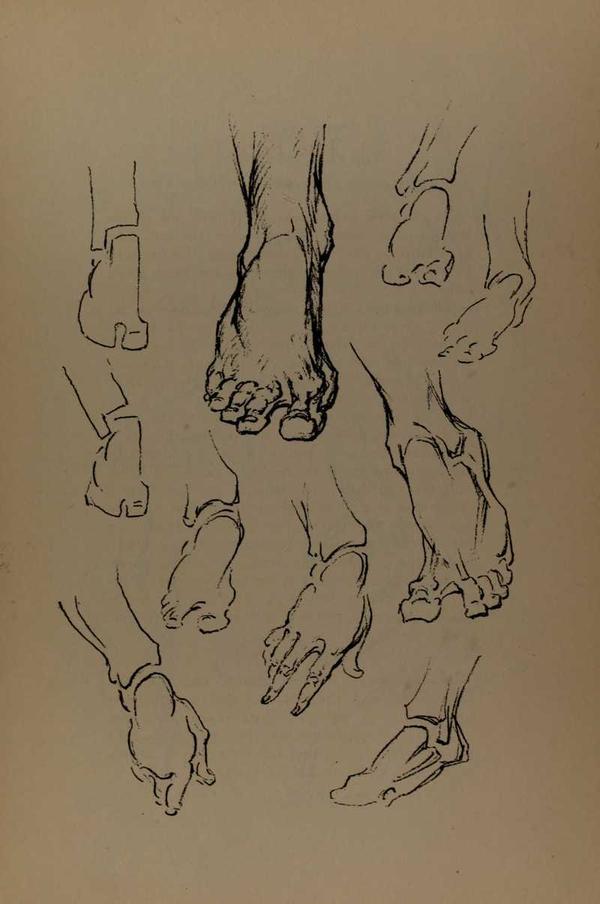anatomia-constructiva-george-bridgman-pies
