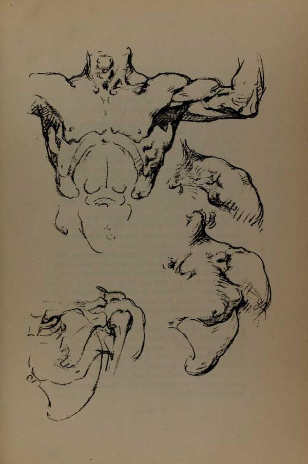anatomia-constructiva-george-bridgman-torso