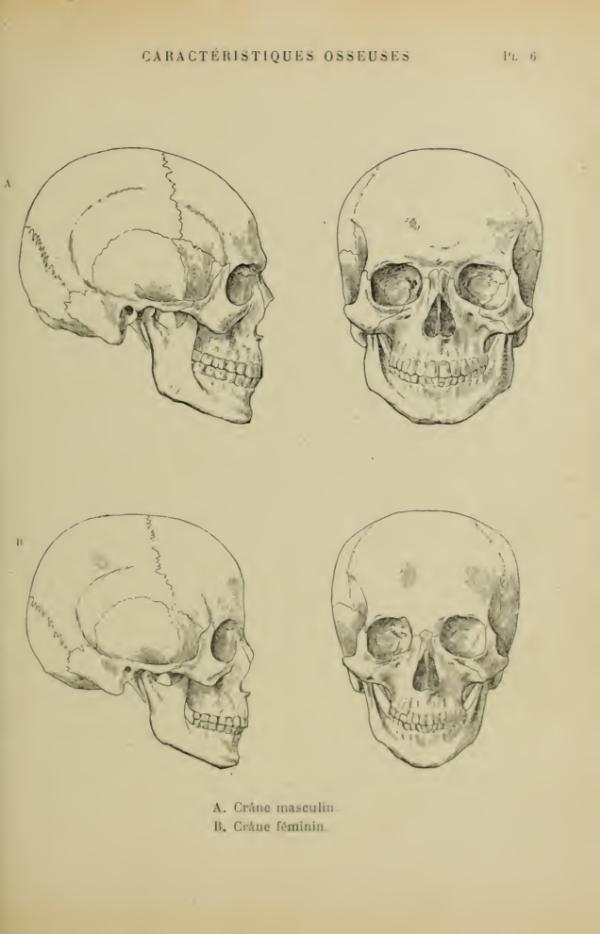 anatomia-humana-femenina-caracteristicas-oseas-cabeza-masculino-femenino