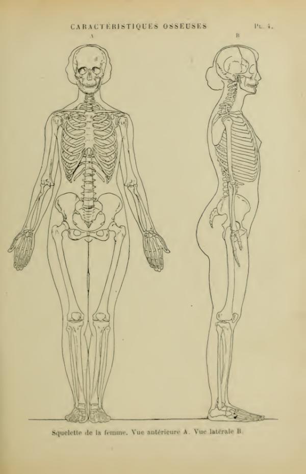 anatomia-humana-femenina-caracteristicas-oseas-esqueleto-femenino