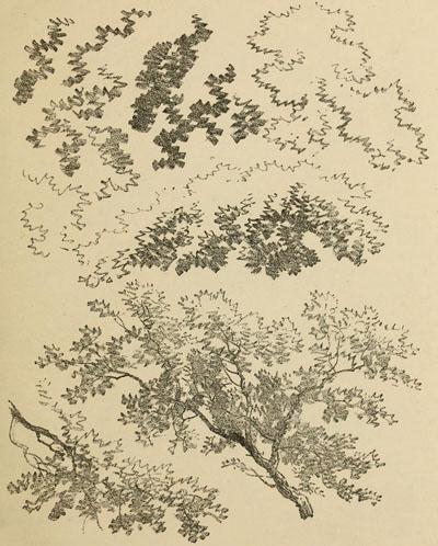 como dibujar arboles