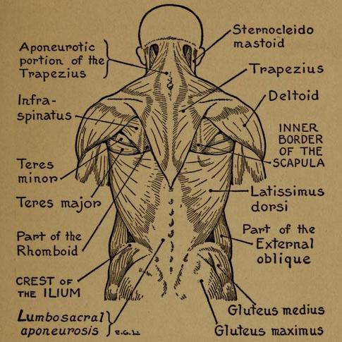 practical-art-anatomy-detail1