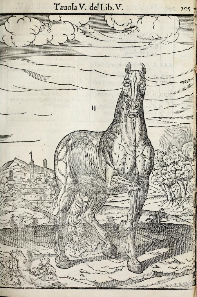 anatomia-caballo-carlo-ruini-page-296