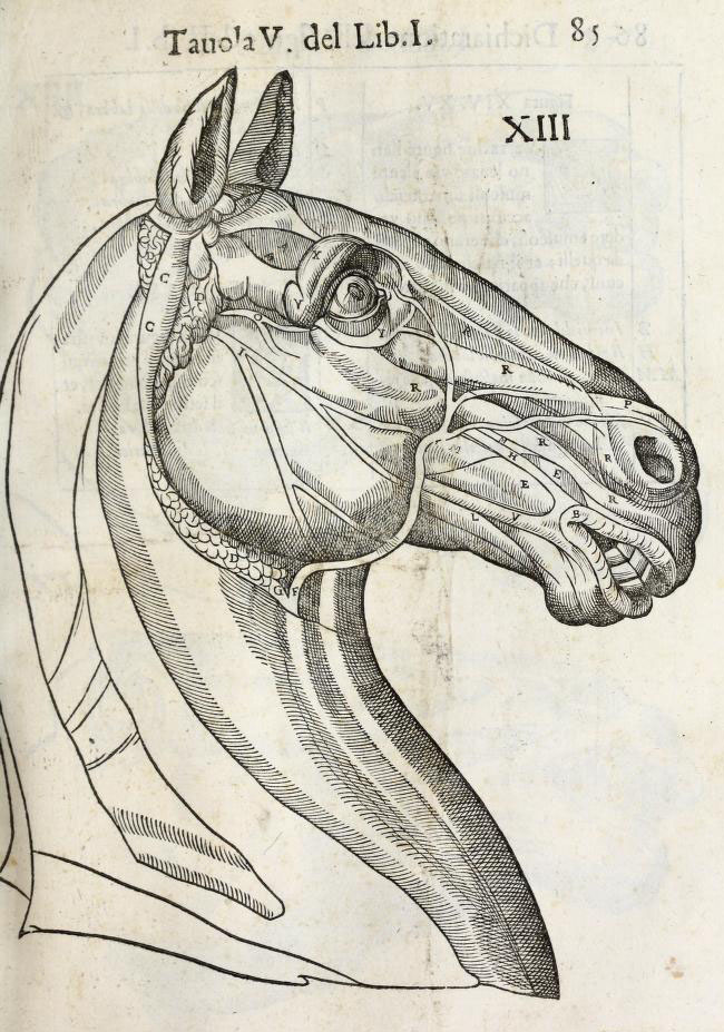 139 - Anatomía del Caballo de Carlo Ruini - Gcomics