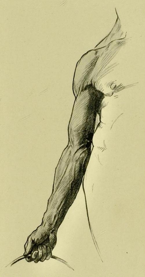 anatomia-humana-para-artistas-frente-extremidad-superior-posicion-cargando-peso