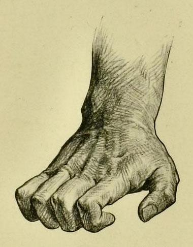 anatomia-humana-para-artistas-tendones-extensores-de-la-mano
