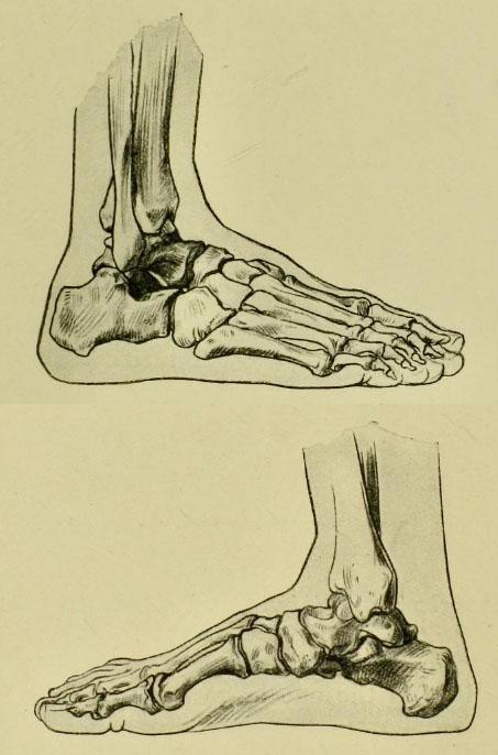anatomia-humana-para-artistas-huesos-del-pie