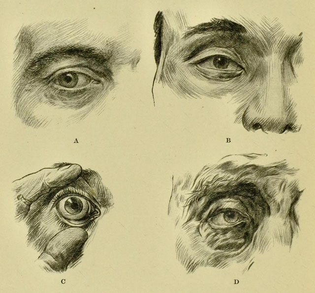 anatomia-humana-para-artistas-detalles-de-ojo-ceja-y-parpados