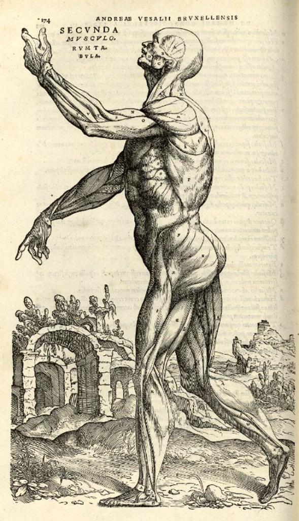 de-humani-corporis-fabrica-page-174