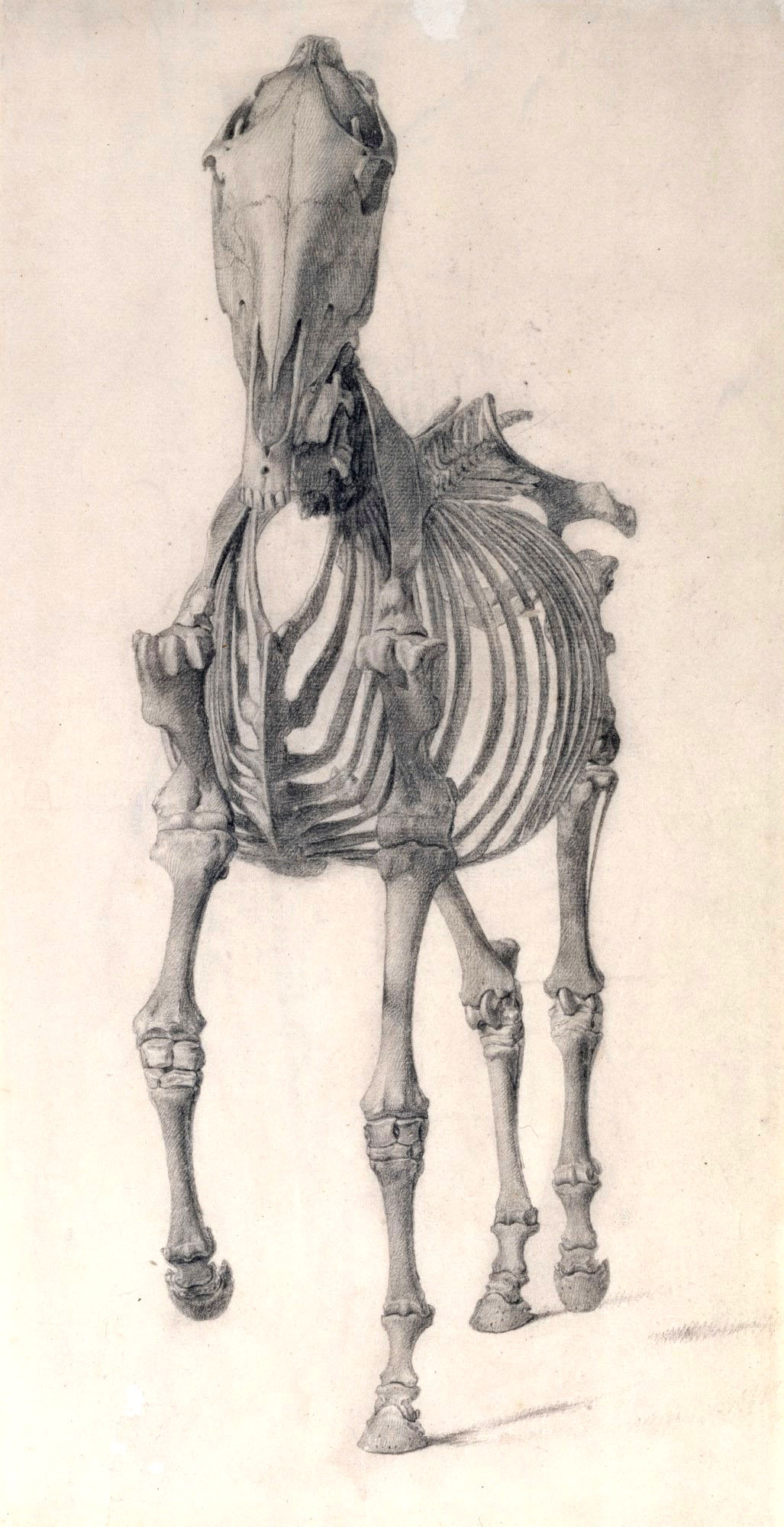 george-stubbs-caballo-anatomia-osea