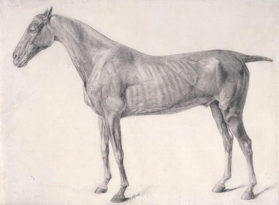 george-stubbs-caballo-perfil