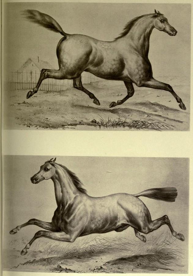 el-movimiento-del-caballo-muybridge-ilustracion