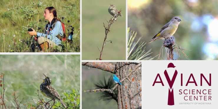Wildlife GIS Web Site