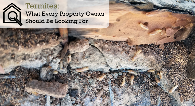 Termites: What Every Property Owner Should Be Looking For