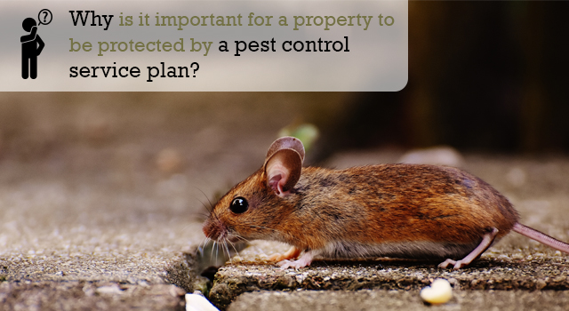 Why is it important for a property to be protected by a pest control service plan?