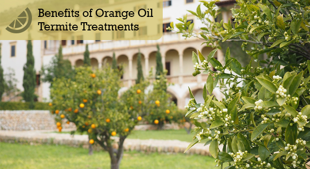 Benefits of Orange Oil Termite Treatments