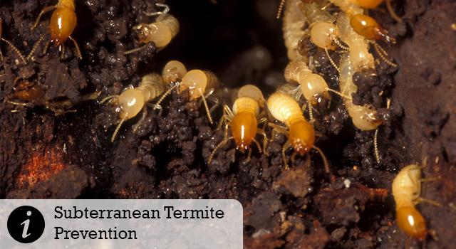 Subterranean Termite Prevention
