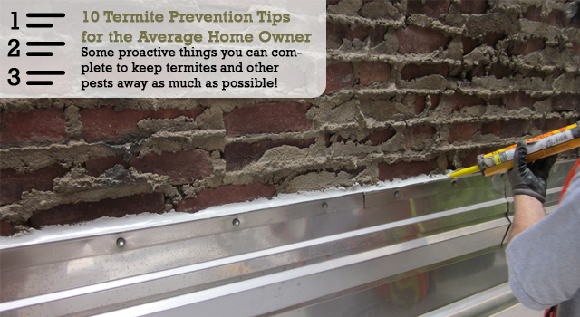 10 Termite Prevention Tips the Average Home Owner can Complete