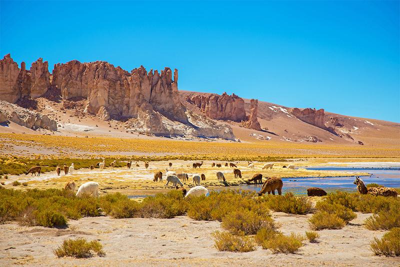Salar de Tara em San Pedro de Atacama no Chile - 2019 | Dicas do Chile