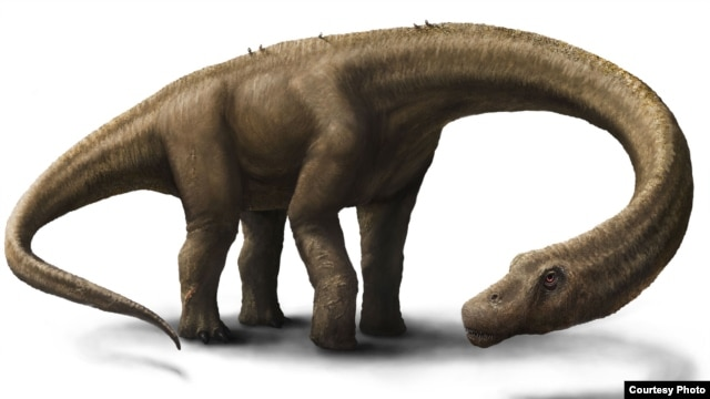Artist rendering of Dreadnoughtus (Courtesy: Jennifer Hall)
