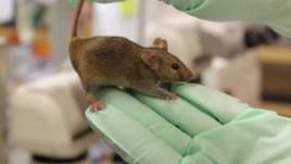 Một loại protein tìm thấy nơi chuột con có thể đảo ngược được một số tác dụng của tuổi già nơi những con chuột già