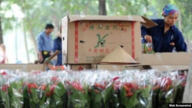 Đại diện nơi cung cấp hoa được trích lời cho biết cho biết, đơn vị này thường mua các loại thùng có sẵn về đựng hoa rồi sau đó mang đi phân phối.