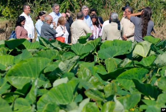El exsecretario de Agricultura de EE.UU. Thomas Vilsack (centro a la derecha), y el senador Jeff Merkley de Oregón (izq. de Vilsack), visitan una granja orgánica en Guira de Melenas, cerca de La Habana en una visita oficial para tratar de impulsar el comercio con Cuba. Nov. 13, 2015.