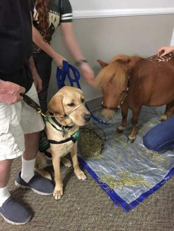 Hackett and therapy horse