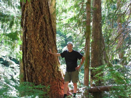 Easterners are not used to trees of this size or beauty