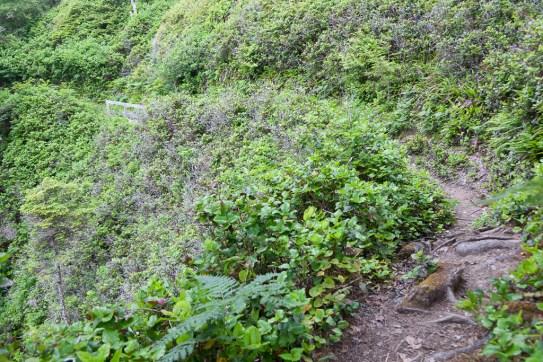 Tsusiat Falls to Cribs Creek