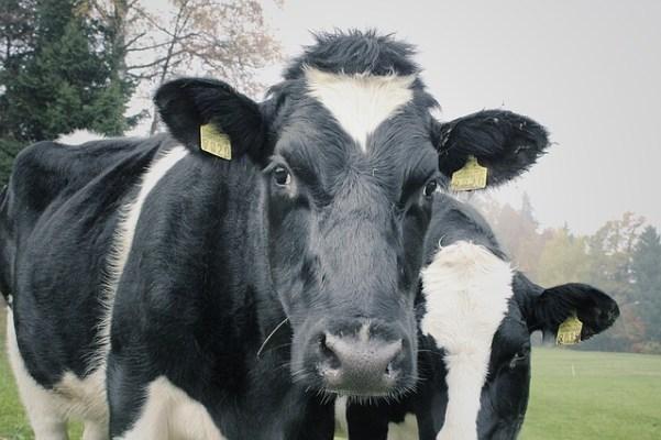 dairy revenue protectionn