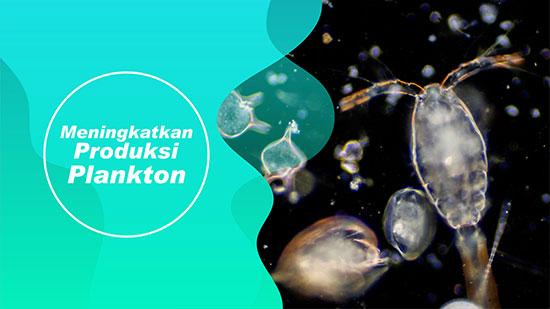 plankton vaname