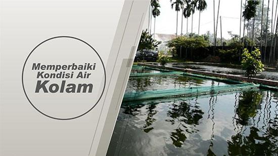 kondisi air kolam
