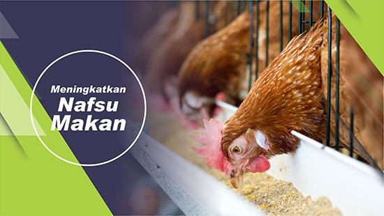 nafsu makan ayam