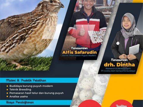 Bisnis Burung Puyuh Modern