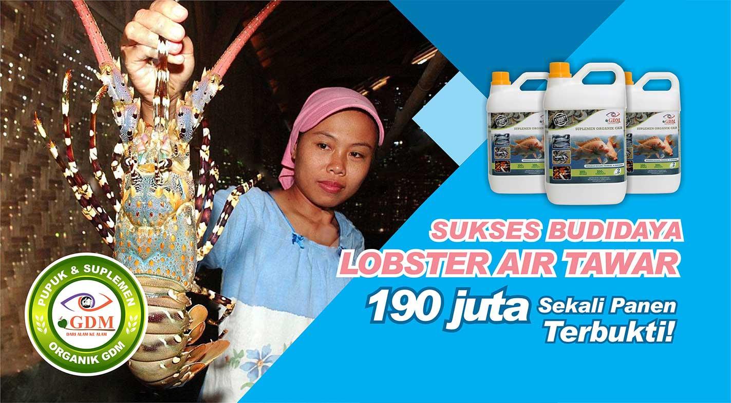 pakan lobster air tawar organik