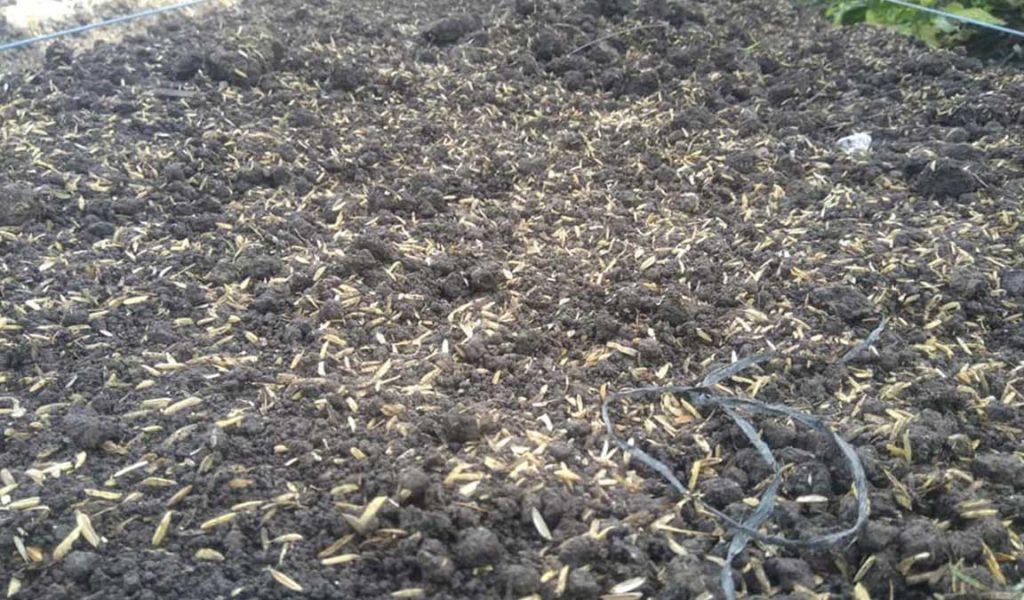 pengolahan lahan budidaya seledri