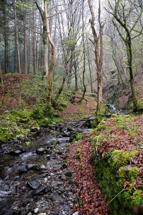 welsh stream misty woods