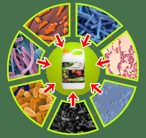 bakteri pupuk organik cair gdm spesialis tanaman buah