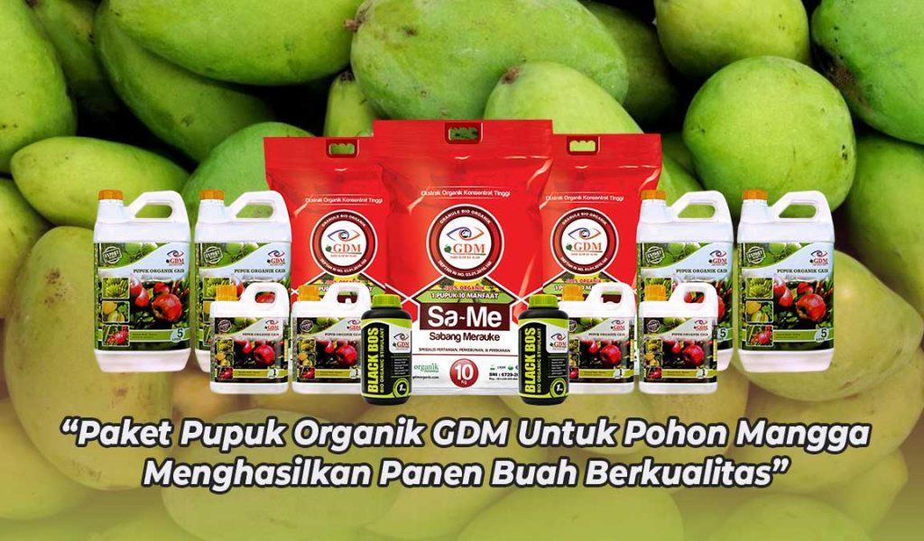 paket pupuk buah mangga