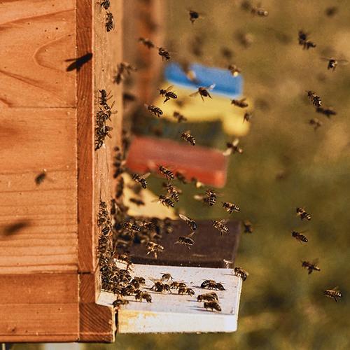 bee colonies 4027005 960 720