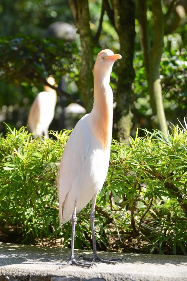 KL Bird Park-1