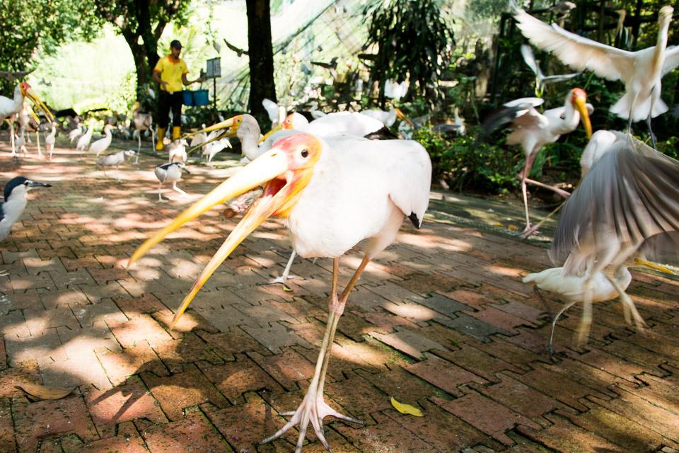 KL Bird Park-7
