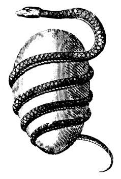 Uovo cosmico con serpente
