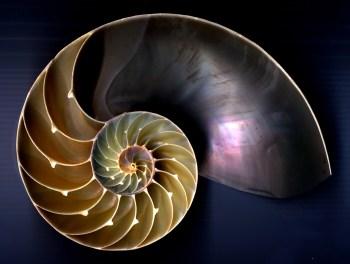 Spirale Fibonacci conchiglia